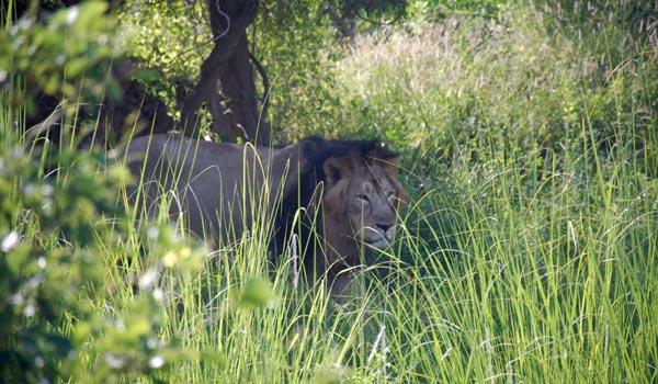 Lions nahargarh
