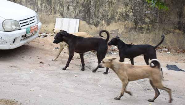 street dogs menace
